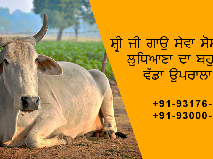 Real Cow and Animal Help Organisation in Ludhiana